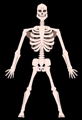 Bones of human graphics representing website traffic